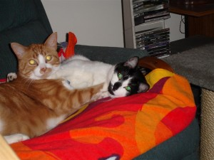 Freckles (left) and Capone (right) caught wrestling on their chair.