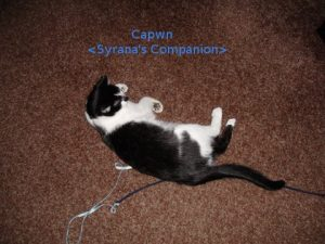 capwn-n-string-pet