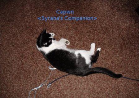 capwn-n-string-pet
